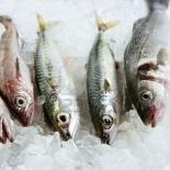 seabass-mackerel